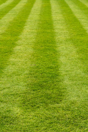 Manicured luxurious lawn freshly mowed with straight stripes
