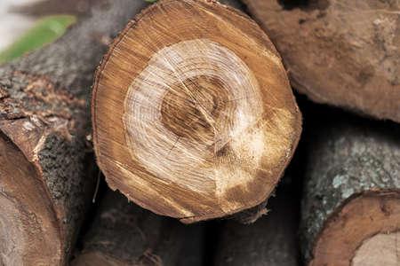 Cortar el árbol Foto de archivo - 79386381