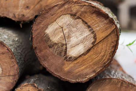 Cut Tree Stock Photo