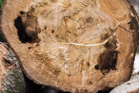 Cortar el árbol Foto de archivo - 79356122