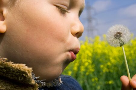 child blowing a dandelion photo