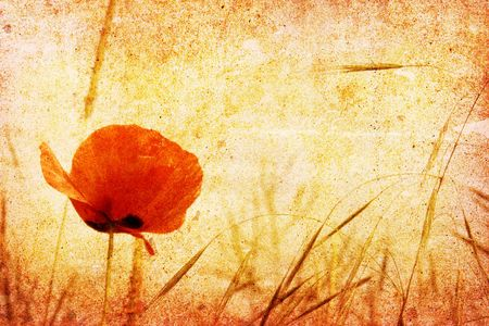 vintage red poppy photo