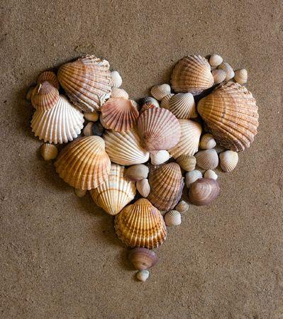 shell heart Standard-Bild