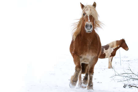 Horse in snow Stock Photo