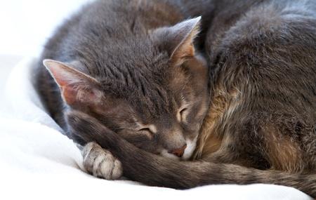 Sleepy cat photo