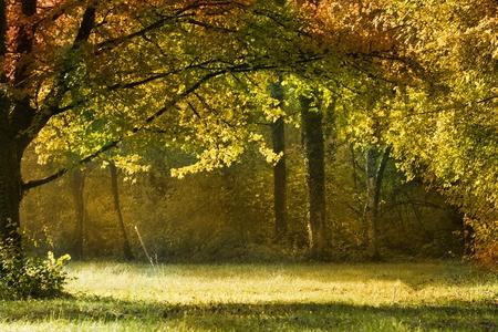 autumn forest Stock Photo - 11111374