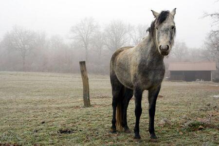 Vintage horse Stock Photo