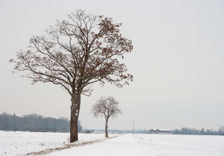 Snowy winter landscape with tress Stock Photo - 11971386
