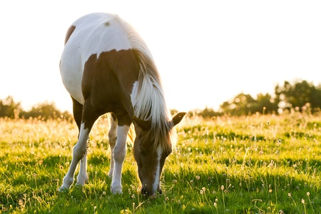 Beautiful horse in a meadow