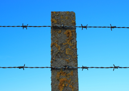 barbed hook wire: Front view of barbed wire on an old cement pole with alga