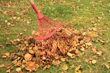 Raking leaves from the autumn garden photo