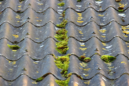 alga: Worn cement fiber roof with different alga