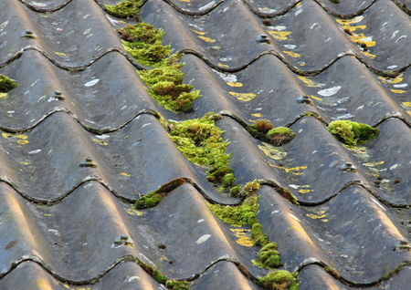 Worn cement fiber roof with different alga Stock Photo - 26545084