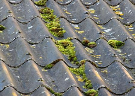 Worn cement fiber roof with different alga Stock Photo - 26545084