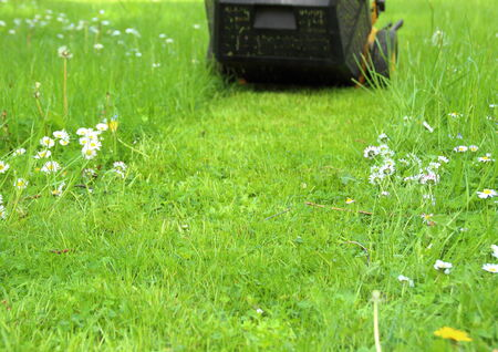 Trail of a lawn mower in the garden photo