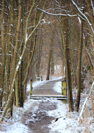 whiteness: Snowy muddy forest path in cold winter Stock Photo