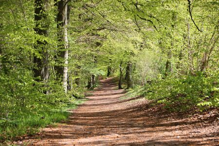 dirt path: Scenic Small Forest Dirt Path in Spring  with fresh green Trees