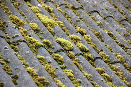 alga: Old Cement Shelter with Curved Roof and Green Alga Background Stock Photo