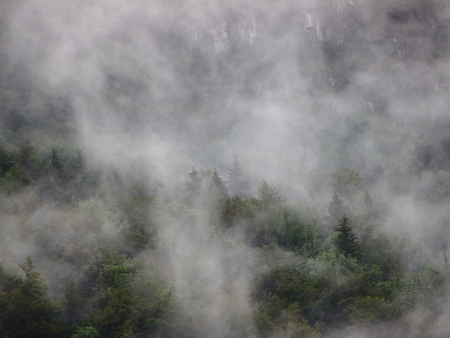 overhang: Thick Forest Fog in Austrian Mountain Cliff Overhang after Cool Rainfall Stock Photo