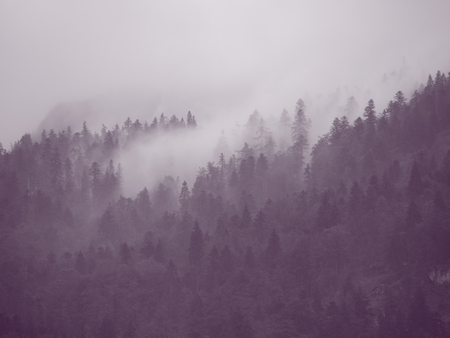 rainfall: Moody Forest Vapor in Austrian Mountains after Cool Rainfall