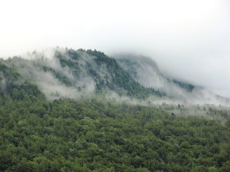 fog forest: Mystery Forest Fog in Mountains after Cool Rainfall in Austrian Alps
