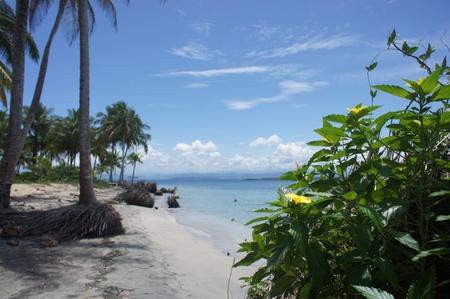 caribbean impressions photo