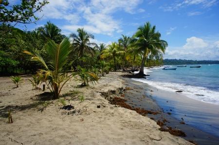 Pflanzen: caribbean impressions