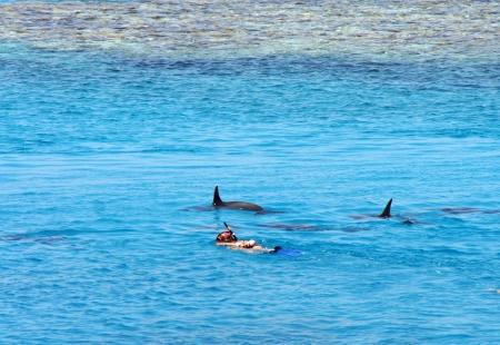 Snorkelen met dolfijnen Stockfoto - 20664928