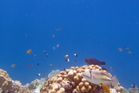 snorkeling in red sea Stock Photo - 20885054