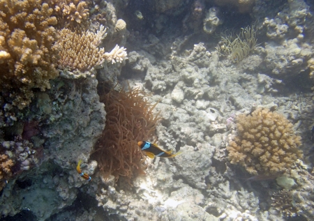 snorkeling in red sea Stock Photo - 20884955