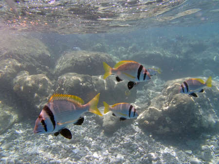 snorkeling in red sea photo
