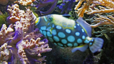 underwater life with many colorful fish and corals Stock Photo - 21241805