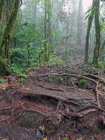 cool landscapes - costa ricas cloud forests photo