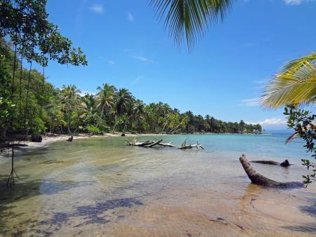 impressions from green nature paradise costa rica Standard-Bild
