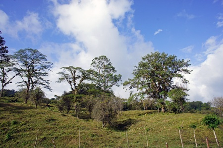 impressions from green nature paradise costa rica photo