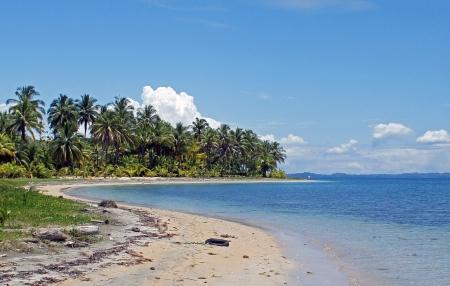 Impressies van groene natuur paradijs costa rica Stockfoto - 21339526