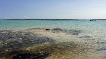 chica: beach in the dominican republic