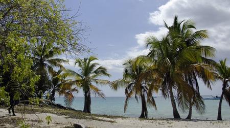 catalina: bellissima isola catalina a Repubblica Dominicana Archivio Fotografico