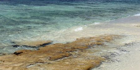 catalina: reff on catalina islands beach