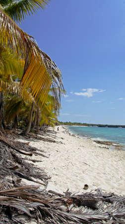 catalina: splendida isola catalina a Repubblica Dominicana Archivio Fotografico