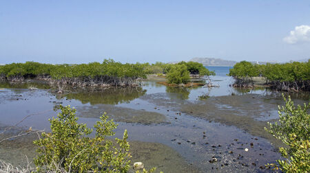 bani: mangrove forest in bani southern domincan republic Stock Photo