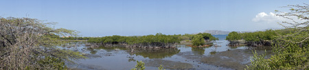 mangrove forest: mangrove forest in bani southern domincan republic Stock Photo