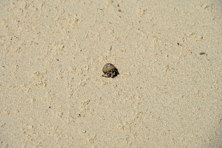 atoll: hermit crab on lovely atoll qulaan islands Stock Photo