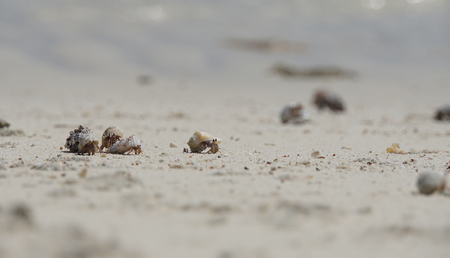 hermit crab on lovely atoll qulaan islands photo
