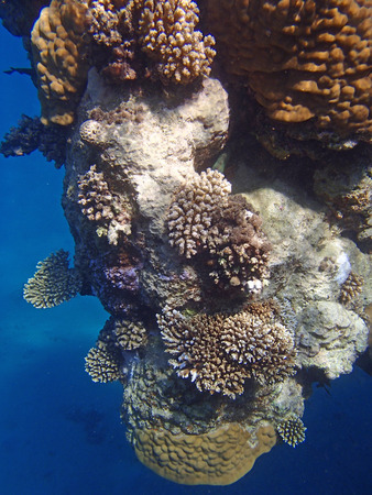 colorful red sea of egypt photo