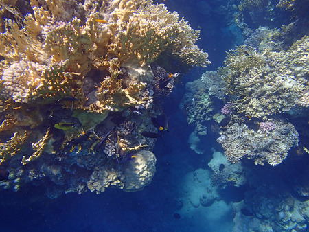 red sea: snorkeling in the red sea