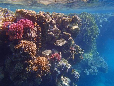 red sea: red sea snorkeling adventure Stock Photo