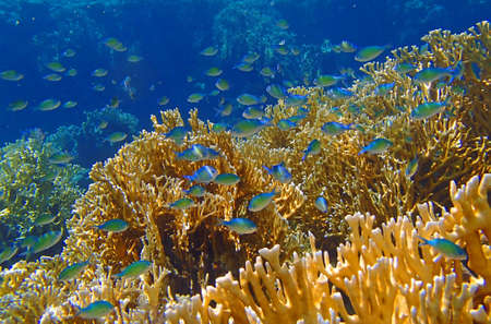 red sea: red sea snorkeling adventure Stock Photo