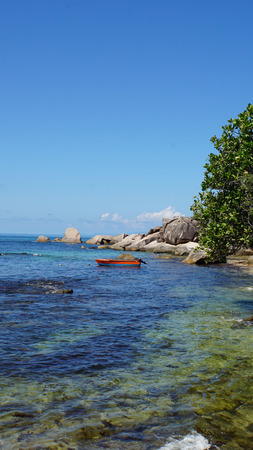 green nature: amazing green nature on the seychelles