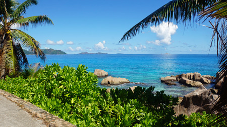 la digue: palm trees and granite rocks on la digue
